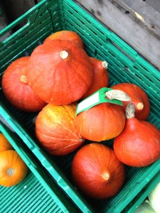…and small squash...